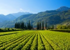 trentino alto adige southern vineyard near garda lake